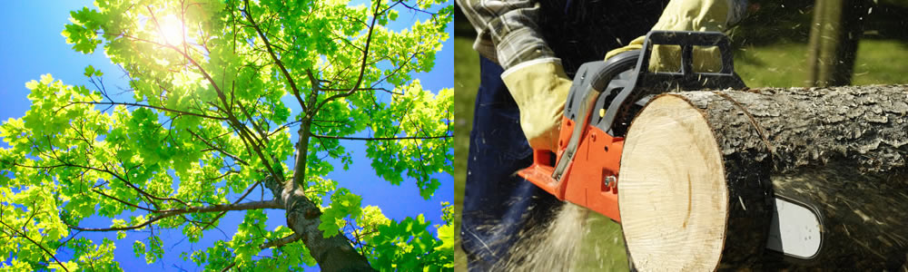 Tree Services Grand Island